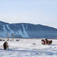 Double H Bar Elk Refuge Sleigh Rides
