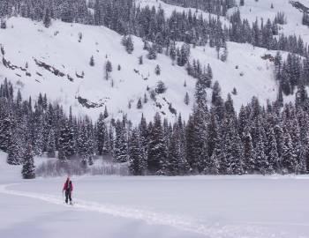Lone Skier In Winter