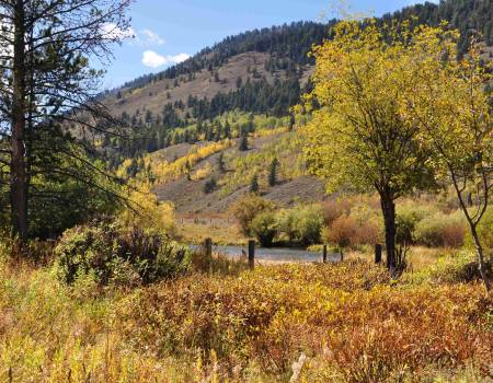 fall leaves in jackson hole wyoming
