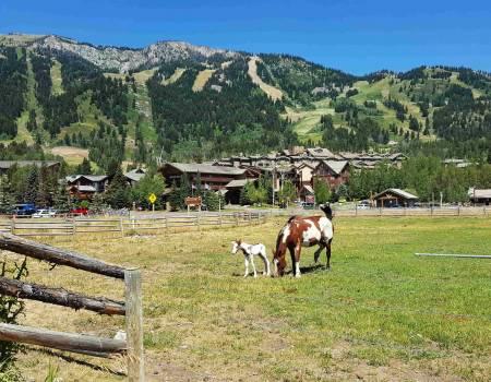 horses teton village wyoming