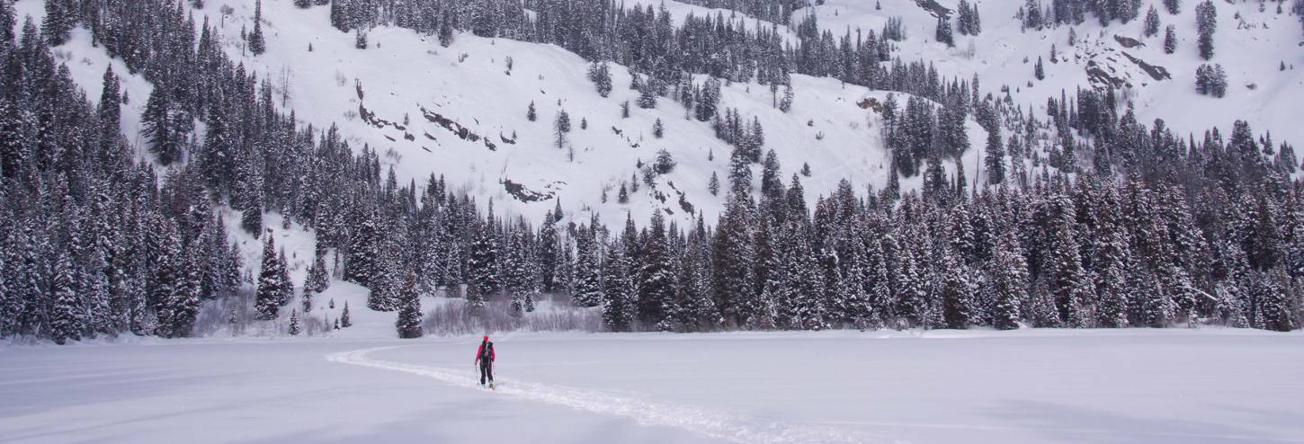 Lone Skier In Winter