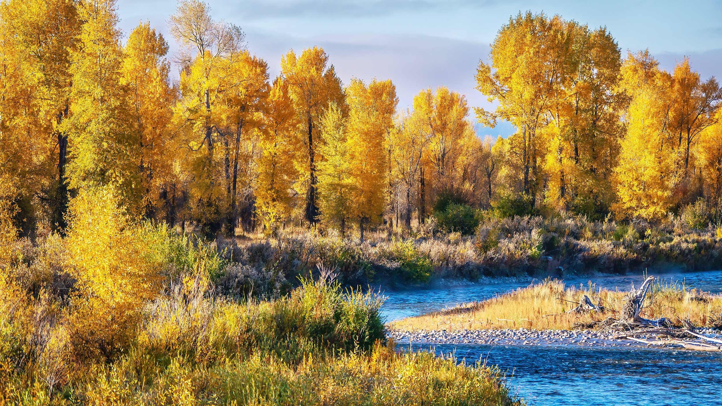 Autumn In Jackson Hole River Teton Cottonwoods Fall