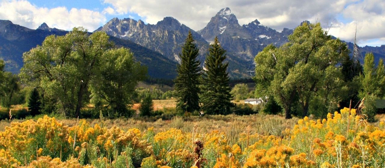 Fall Colors in Jackson Hole, Wyoming