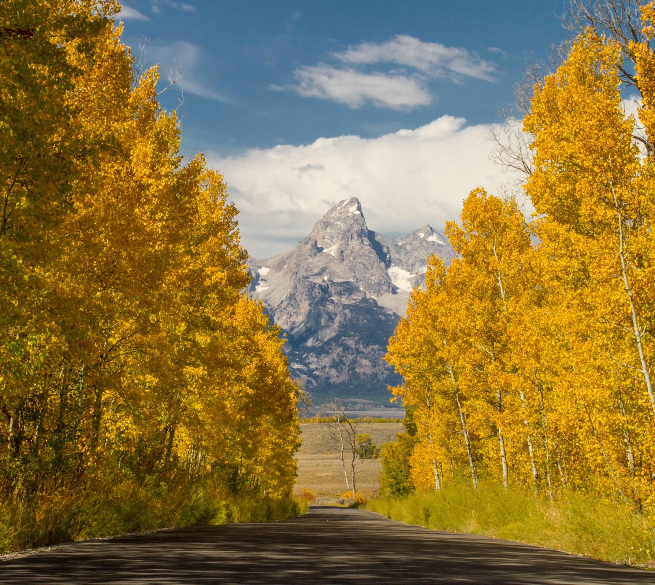 Tetons Aspens Fall Road