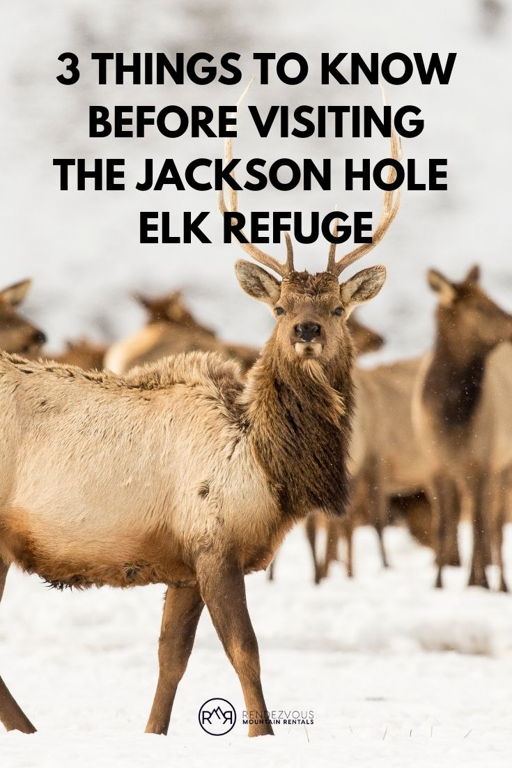 """Text reads """"3 Things to Know Before Visiting the Jackson Hole Elk Refuge."""""""