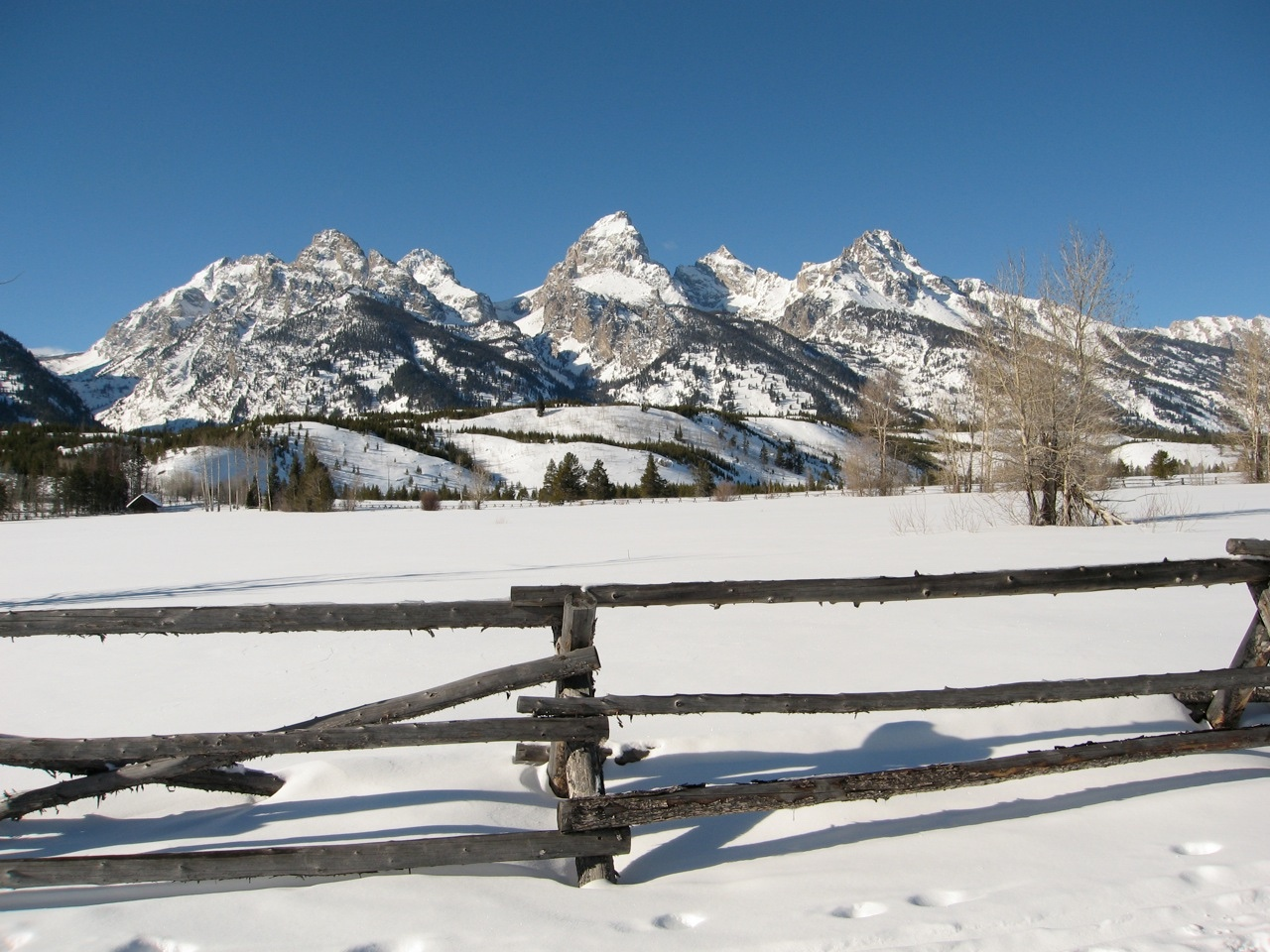 winter jackson hole